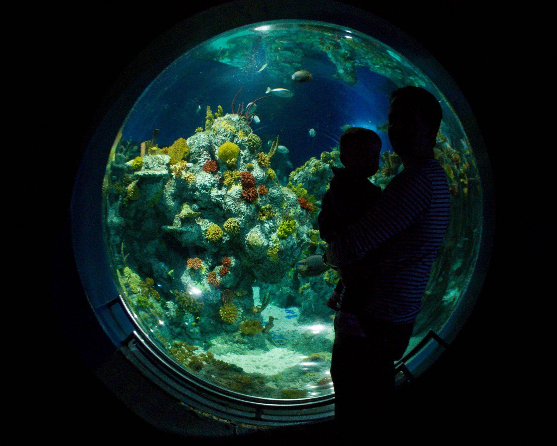 Bristol Aquarium | Athena's First Birthday