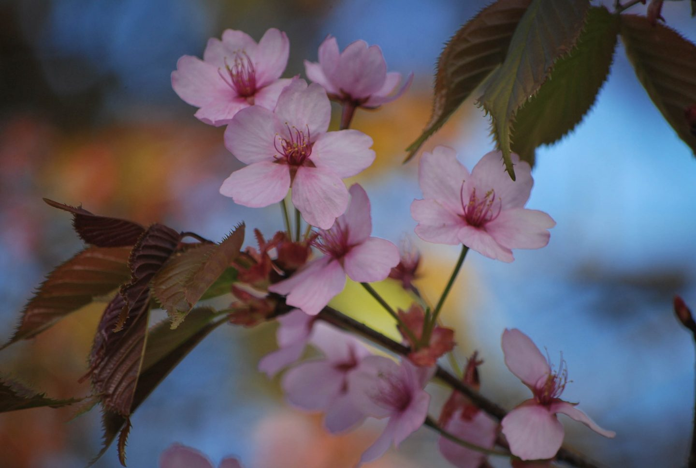Spring Bucket List | 10 Outdoor Activities to do this Season